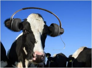 cow-with-headphones1