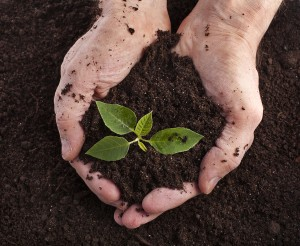 healthy soil in hands